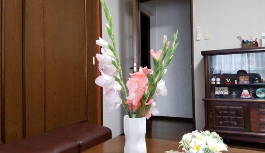 グラジオラスの育て方は植えっぱなしでOK!咲いたので画像にパシャリ