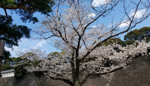 When can you see  Cherry blossoms at The Imperial Palace in 2019? Access ,congestion and movie