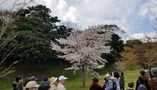皇居の桜 乾通り一般公開で花見してきた!大阪から東京へLCCが安くてお得