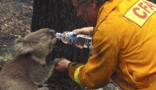 オーストラリアの山火事の現在の状況と原因は?場所とコアラも調査